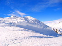 Landschap van hoge Savooiekool in de winter Stock Foto's