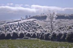 Landschap van Holly Trees op helling met ijskristallen dat wordt behandeld stock fotografie