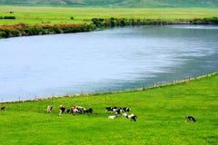 Landschap van Hulunbuir-Weiden stock afbeeldingen