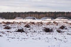 Landschap van industrieel afgevoerd turfmoeras met boomwortels in de winter stock foto's