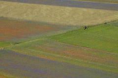 Landschap van Italië Stock Fotografie