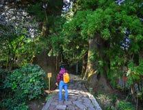 Landschap van Kumano Kodo in Kansai, Japan Royalty-vrije Stock Fotografie