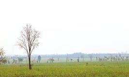 Landschap van landelijk en landbouw ingediend in Thailand Royalty-vrije Stock Foto's