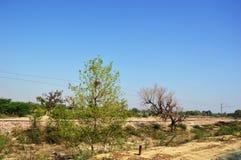 Landschap van landelijk India in Hariyana royalty-vrije stock fotografie