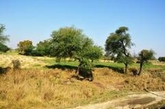 Landschap van landelijk India in Hariyana stock foto's