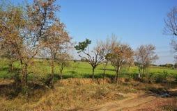 Landschap van landelijk India in Hariyana royalty-vrije stock foto