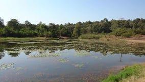Landschap van Leliemeer bij Karura-Bos stock video