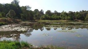 Landschap van Leliemeer bij Karura-Bos stock videobeelden