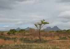 Landschap 3 van Mauritius Royalty-vrije Stock Fotografie