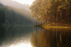 Landschap van meer - bezinning van boom in een meer Royalty-vrije Stock Afbeeldingen