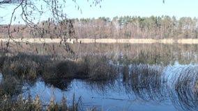 Landschap van Meer in de namen Wolzensee van Brandenburg Bos rond het meer De lente zonder bladeren op bomen stock videobeelden