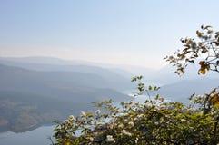 Landschap van meer en berg achter een boom Royalty-vrije Stock Foto