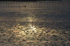 Landschap van moerasland met goud van zonlicht Stock Afbeeldingen