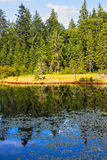 Landschap van mooi meer en zachthoutbos Royalty-vrije Stock Afbeeldingen