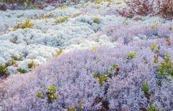 Landschap van mos stock fotografie