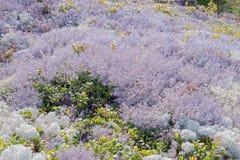 Landschap van mos Stock Afbeeldingen