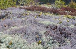 Landschap van mos Stock Foto