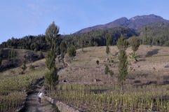 Landschap van Mt Sumbing, Centraal Java, Indonesi? in de ochtend stock afbeeldingen