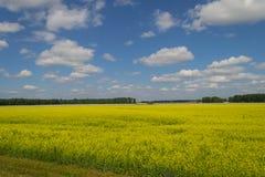 Landschap van multicolored gebied van gele die bloemen, aan FA wordt gerijpt royalty-vrije stock foto