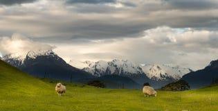 Landschap van Nieuw Zeeland stock foto's