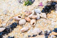 Landschap van oceaanbretagne Frankrijk stock afbeelding