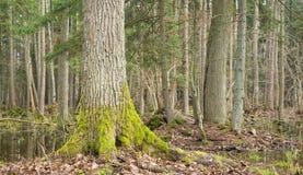 Landschap van oud bos en water Royalty-vrije Stock Fotografie