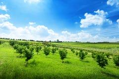 Landschap van Piemonte, Italië Stock Foto