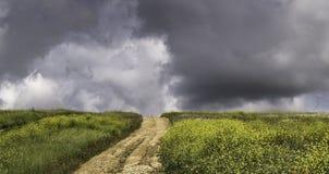 Landschap van platteland Landelijke weg Stock Afbeelding