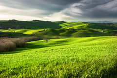Landschap van platteland Toscanië, Italië Royalty-vrije Stock Foto's