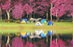 Landschap van roze tuin Stock Afbeelding