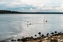 Landschap van Rutland Water Park, Engeland royalty-vrije stock afbeeldingen