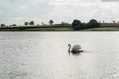 Landschap van Rutland Water Park, Engeland royalty-vrije stock fotografie