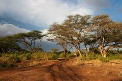 Landschap van Samburu vóór onweer, Samburu, Kenia Stock Foto