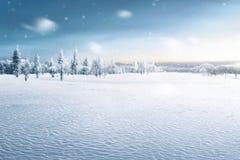 Landschap van sneeuwgebied met bevroren bomen royalty-vrije stock afbeelding