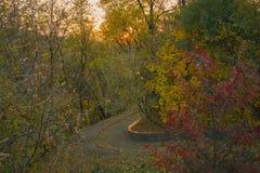Landschap van steegweg onder de bomen Royalty-vrije Stock Afbeelding