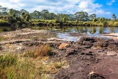 Landschap van struiken en bomen rond een droog meer met weinig van water en grassen op rots in voorgrond Stock Foto