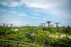 Landschap van Super bomen bij Tuinen door de Baai, Singapore stock fotografie