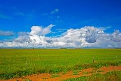 Landschap van tarwegebied, wolken en hemel stock foto's