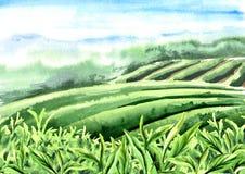 Landschap van theeaanplanting Sluit fesh omhoog groene theebladen met ochtendgloed Hand getrokken waterverfillustratie stock fotografie