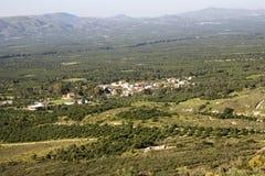 Landschap van uitgebreid olijfboombosje in Kreta Stock Foto