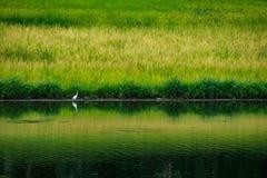 Landschap van Vijver in Groot reservoir in Thailand Royalty-vrije Stock Afbeeldingen
