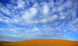 Landschap van vlakte in Alentejo Stock Foto's