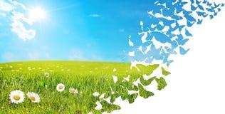Landschap van vliegende vlinders wordt gemaakt die Stock Foto