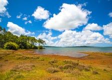 Landschap van waterreservoir in het eiland van Mauritius stock foto's
