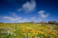 Landschap van weide met bloemen stock fotografie