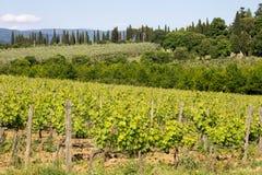 Landschap van wijngaard Stock Afbeelding