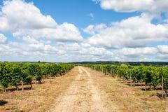 Landschap van wijngaarden in de de Loire-Vallei Frankrijk stock fotografie