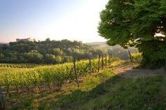 Landschap van wijnstok en druiven. Stock Fotografie