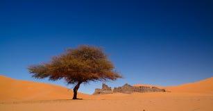 Landschap van zandduin en het beeldhouwwerk van de zandsteenaard in Tamezguida in het nationale park van Tassili nAjjer, Algerije stock fotografie
