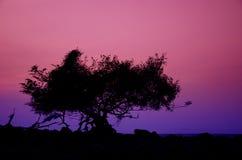 Landschap van zonsondergang royalty-vrije stock foto